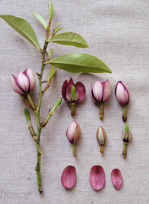 Leaves-and-buds-small1